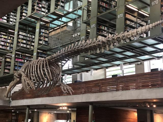 ヴァスコンセロス図書館